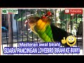 Masteran Awal Mula Lovebird Jantan Birahi Ke Bunyi  Mp3 - Mp4 Download