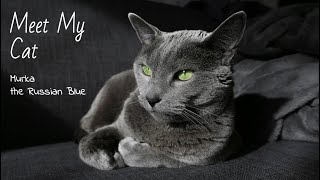 Meet My Russian Blue Cat! // My Quarantine Companion