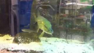 Hecht Fütterung Aquarium