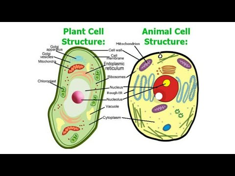 Structure Of Plants And Animal Cells|| Biology || Class-9 ...