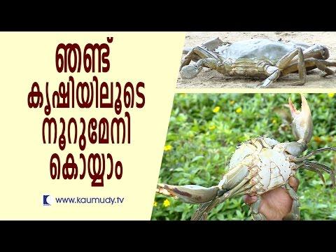 Huge profit in Crab farming | Haritham Sundaram | Kaumudy TV