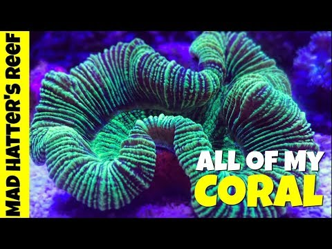 All Of The Corals In My Reef Tank