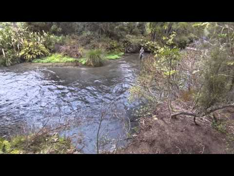 One Of The Best Trout Fisherman I Know, Fishing The Waitahanui