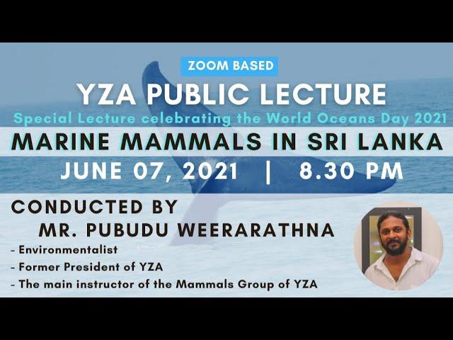 Marine Mammals in Sri Lanka