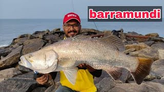 യ മ ന ക ള ഞ ച big barramundi on jig Lure Kerala harbour fishing psycho angler