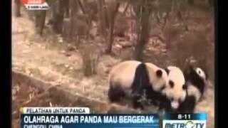 video konyol anak panda jahil