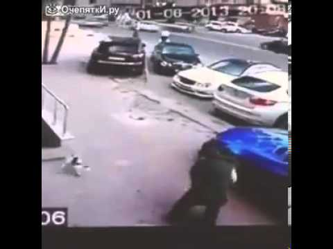 Кот напал на собаку с хозяйкой