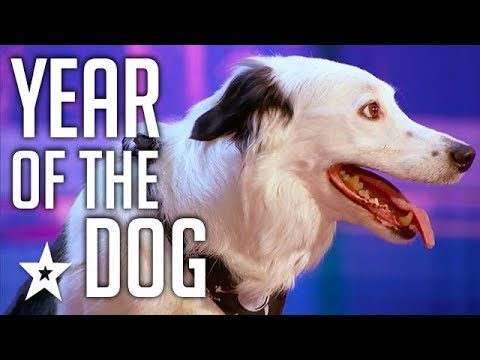 Celebrating THE BEST DOG AUDITIONS & TRICKS EVER  On Got Tal