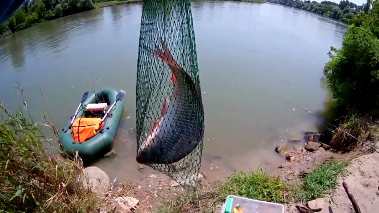 ловля чехони на реке кубань