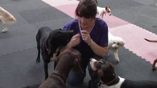 Dog Training Ireland - Business Case Study Video - Instigator Media Video Production Dublin