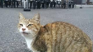 猫寺の朝7時、集まってくる猫ちゃん達「ご飯まだ?」 thumbnail