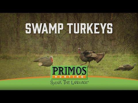 Swamp Turkeys