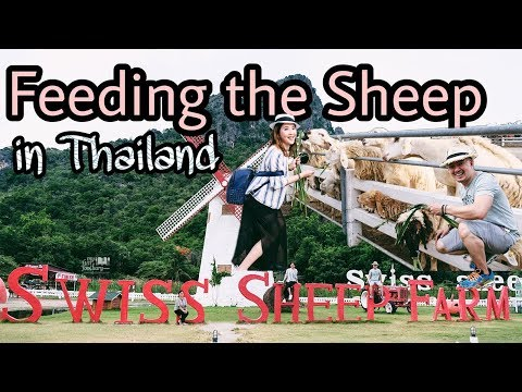 Swiss Sheep Farm Cha-Am Thailand | Vlog Travel Myfunfoodiary