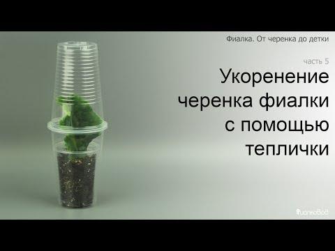 видео: Курс 1. Часть 5. Укоренение черенка фиалки с помощью теплички.