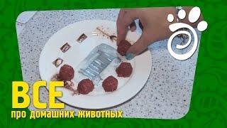Натуральное Питание Для Собак. Все О Домашних Животных