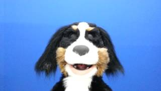 Shaggy Mountain Dog Puppet by Axtell