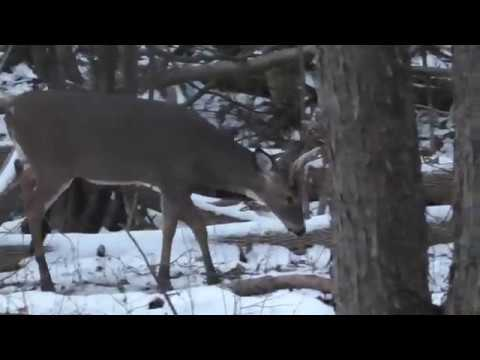 Self Filmed 2019 Upstate NY Deer Rifle Hunting