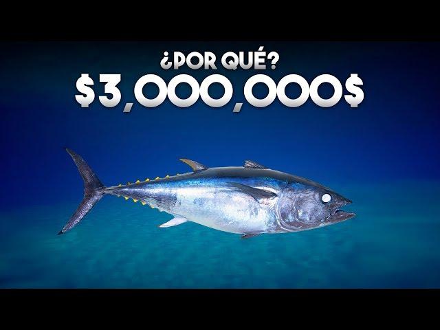 ¿Por qué este pez cuesta millones de dolares?