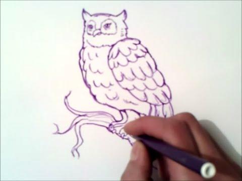 como dibujar un buho paso a paso | como dibujar un buho - YouTube