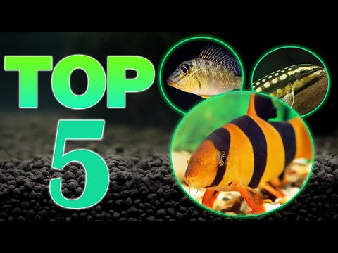 Top 5 Bottom Dweller Freshwater Fish