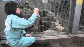 ツシマヤマネコ ツシマヤマネコ 検索動画 24