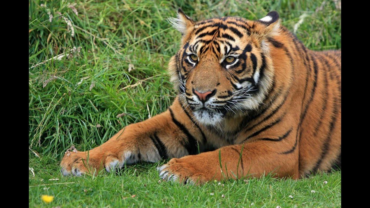 Hewan Langka2016 Binatang Hewan Images