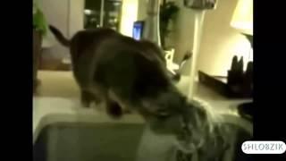 СМЕШНЫЕ КОШКИ  Подборка самых угарных видео про кошек и котов
