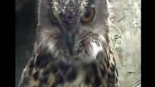 Falconry Scotland Video 1