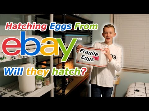 Unboxing & Incubating Silkie Hatching Eggs From EBay!