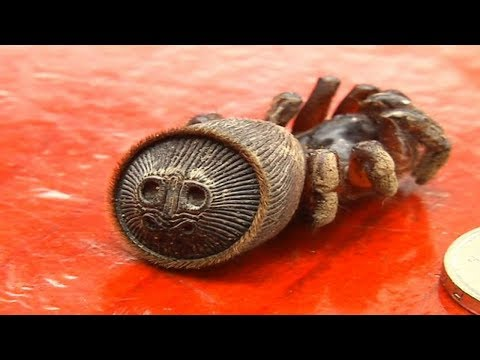 A Farmer Thought He'd Found An Ancient Relic, But Then He Realized It Was The Rarest Of Spiders