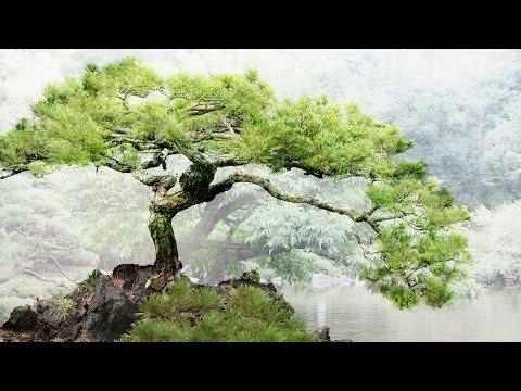 Relaxing Japanese Music - Bonsai Trees