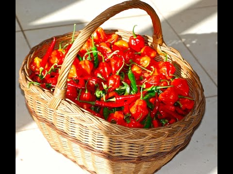 CHILLIES – THREE SIMPLE WAYS OF PRESERVING