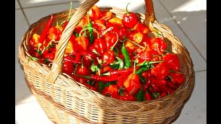 CHILLIES - THREE SIMPLE WAYS OF PRESERVING