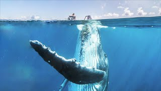 Top 10 Largest Fish Alive on Planet Earth