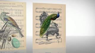Винтажные картинки. Красивые птицы