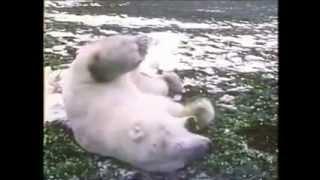 Trauma bear