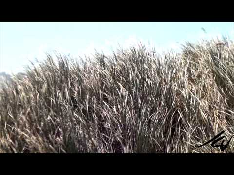 Oregon Dunes National Recreation Area -  Best of USA Travel  - YouTube
