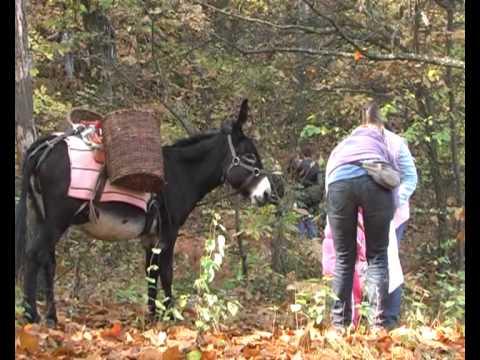 Nel bosco a raccogliere castagne youtube for Raccogliere castagne