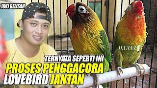 Download lagu TERNYATA SEPERTI INI ? CARA PROSES PENGGACORAN LOVEBIRD JANTAN || BONGKAR RAHASIA VERSI JOKI GELISAH