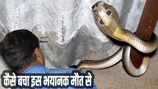The most dangerous and deadly cobra rescue of my life | Kamal choudhary 9755695959