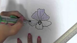 NDP orchid drawing