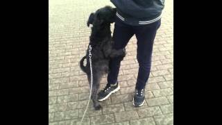 Спаривание собаки и человека