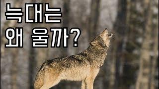 늑대와 강아지는 왜 울까? (0.0)