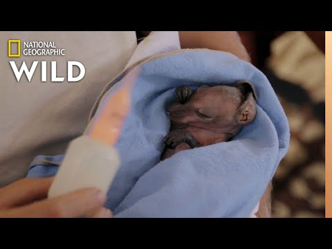 A Miracle Baby Kangaroo Rescue | Out There With Jack Randall