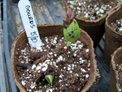 How To Grow Gourds For Crafting