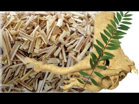 """How Herb """"Tongkat Ali"""" Can Increase Your Testosterone & Boost Your Libido?"""