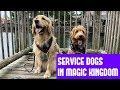 Service Dogs At Disney World!! || Disney Vlog #2