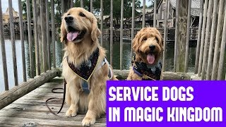 Service Dogs at Disney World!! || Disney Vlog #2