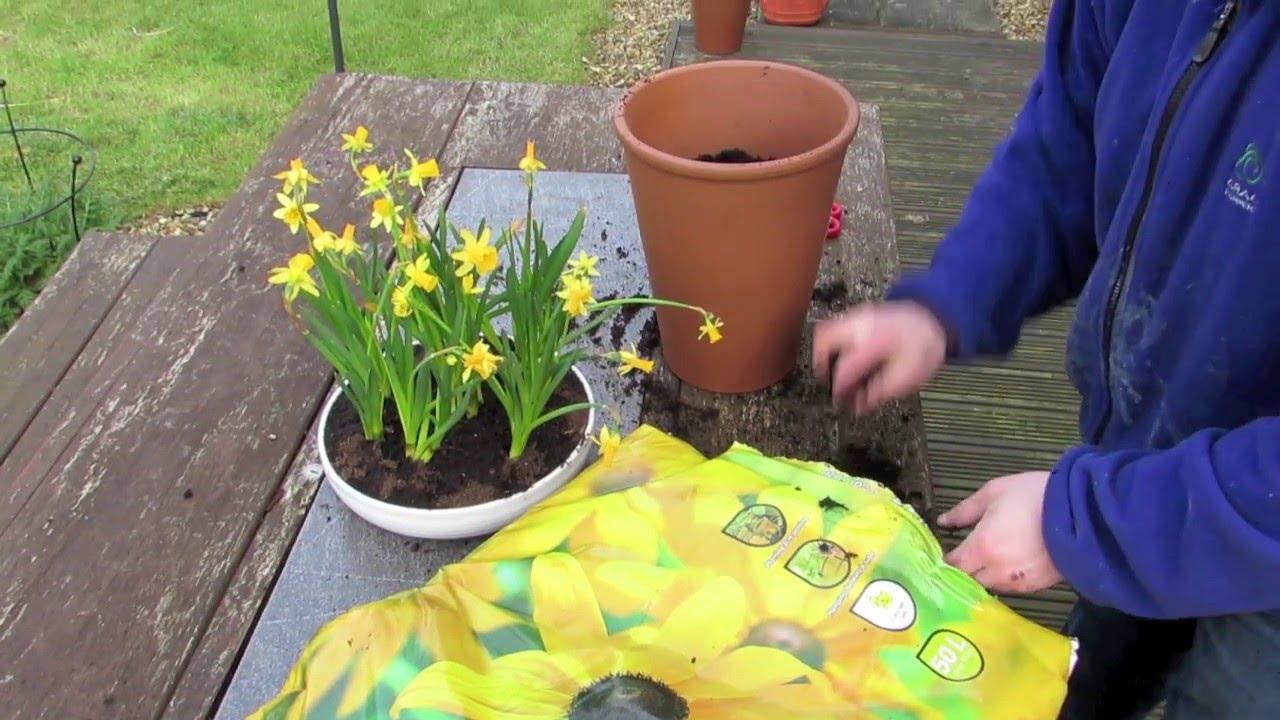 Potting Spring Flowers Youtube