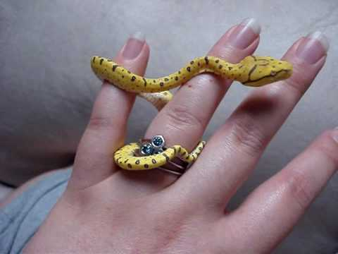 Ambition ~Holding Baby Green Tree Python (Chondro) - YouTube - photo#7
